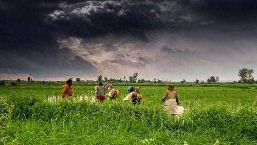 india, agricultura, reforma agraria, PIB, politica, medidas, cultivo, semillas