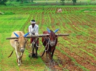 india, agricutura, exportaciones